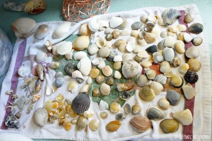 seashells laid out on a towel for a seashell wreath