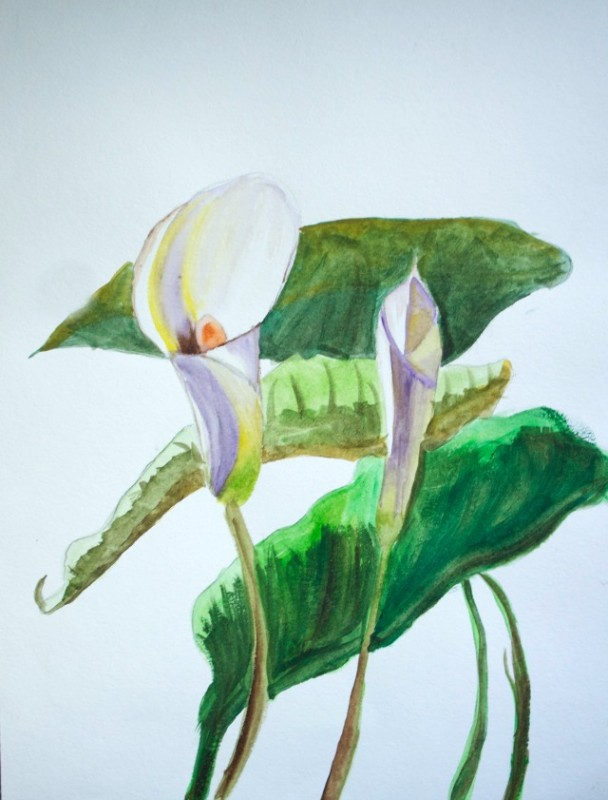 lilies-watercolor