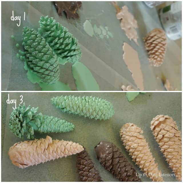 pinecones-drying