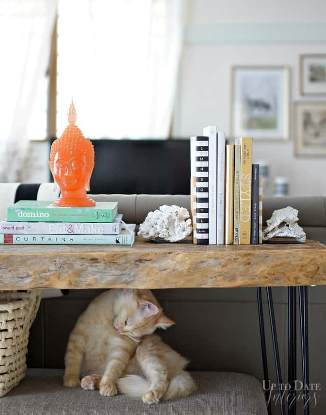 Coral bookends and design and craft books
