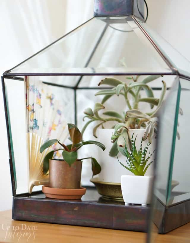 plant terrarium from candle lantern