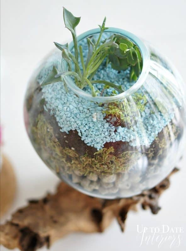 DIY Glass and wood terrarium
