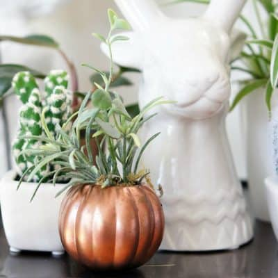 copper-pumpkin-plant-feature