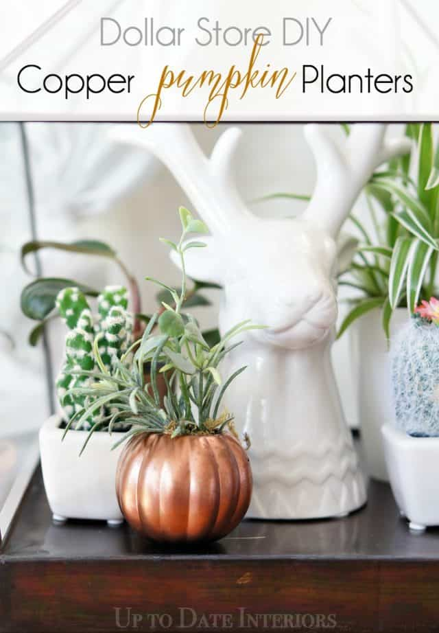 copper-pumpkin-plant-pinterest