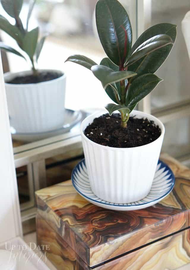 plants in master bedroom makeover