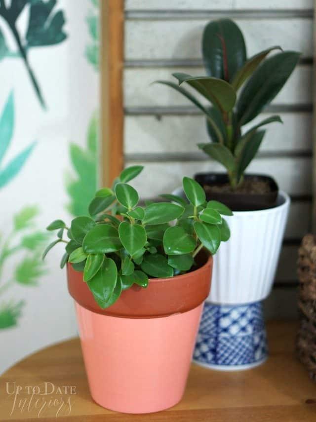 dollar store plants in a rental kitchen