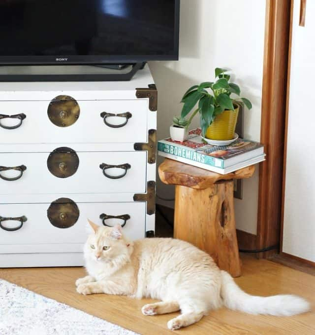global eclectic style living room with cat