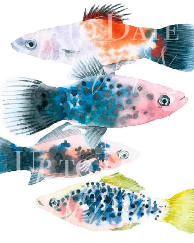 watercolor fish art free printable