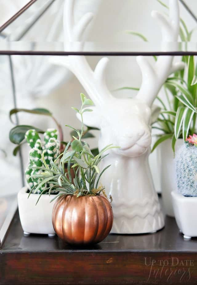 dollar store copper pumpkin pail planter