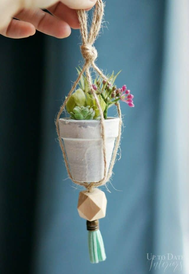 plant-ornament-up-close-640