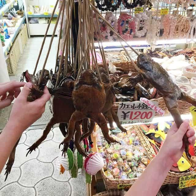 Frog Purse Okinawa