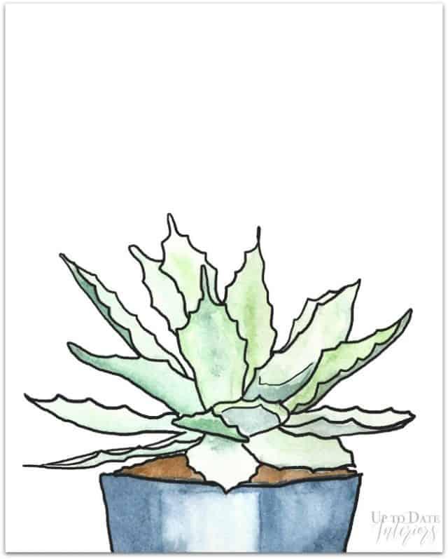 Succulent Series 2 8x10 Drop Shadow