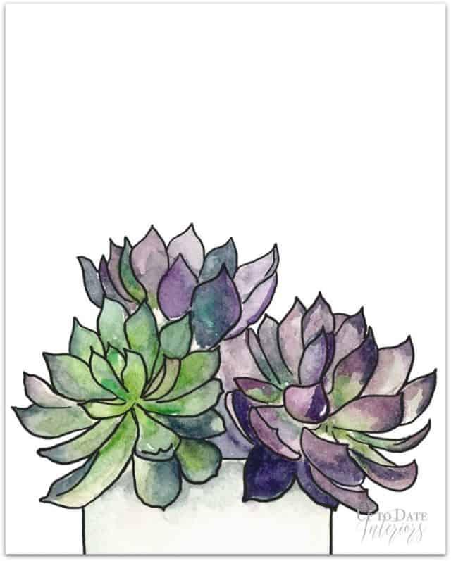 Succulents Series 1 Drop Shadow