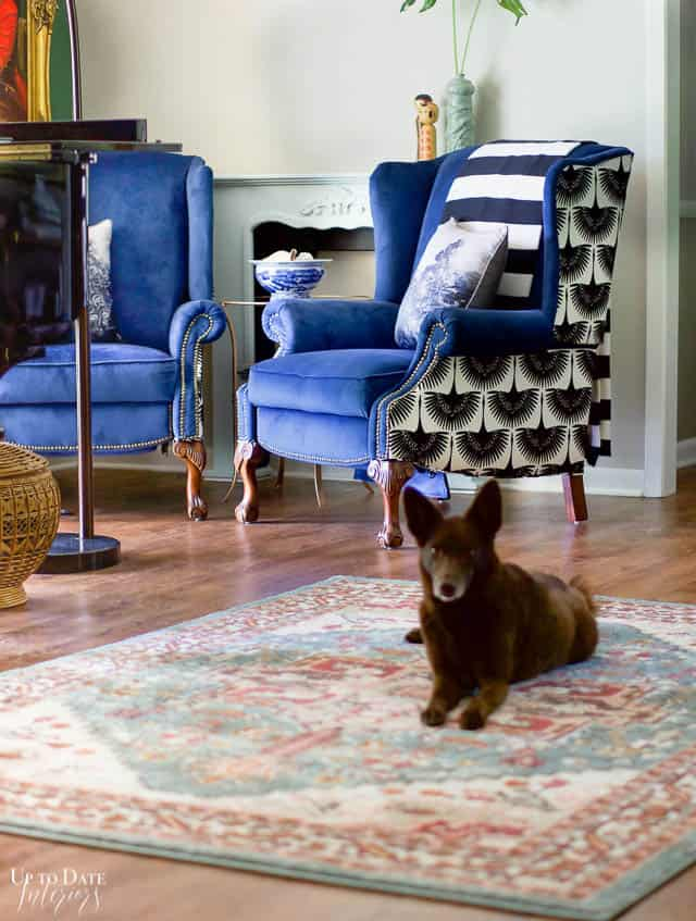 brown dog on colorful rug in front of two blue velvet wingback chairs for the one room challenge reveal