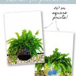 Ferns Pinterest Blue