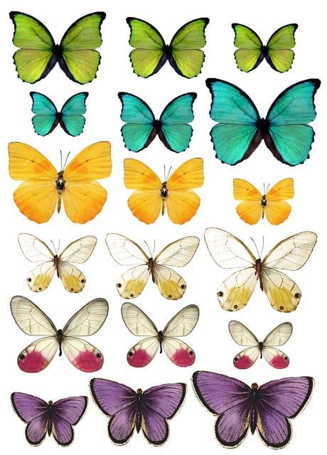 Soe 2013 Possibility Butterflies