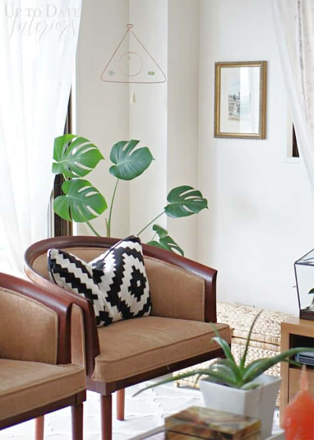 Okinawa Home Summer Monstera